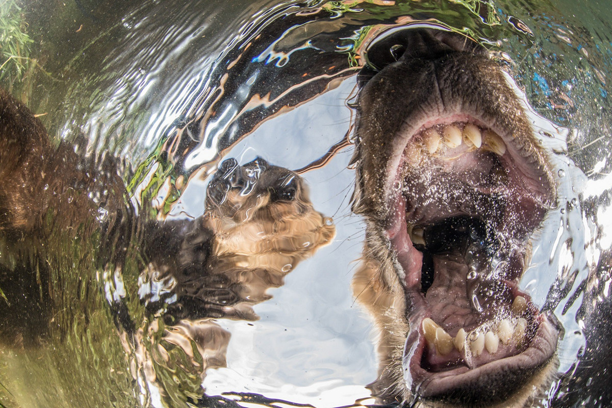 """The life of the sea depths in the works of the winners of the contest """"Underwater Photographer of the Year - 2019"""" 30"""
