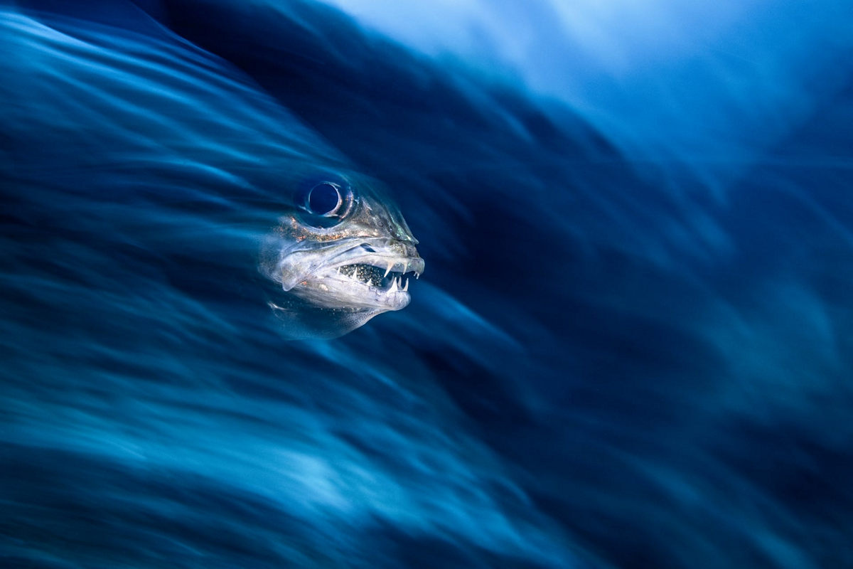 """The life of the sea depths in the works of the winners of the contest """"Underwater Photographer of the Year - 2019"""" 5"""