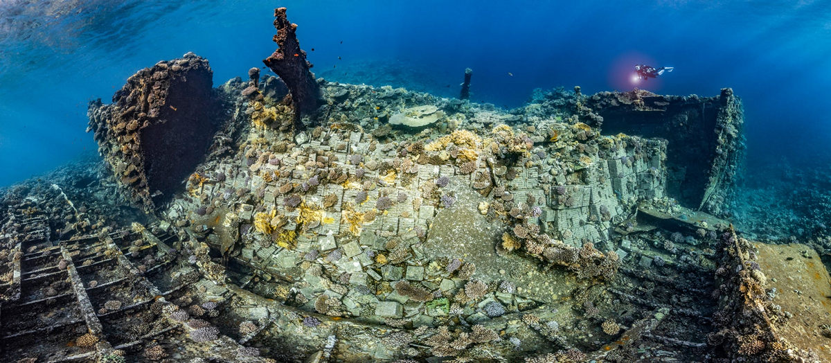 """The life of the sea depths in the works of the winners of the contest """"Underwater Photographer of the Year - 2019"""" 7"""