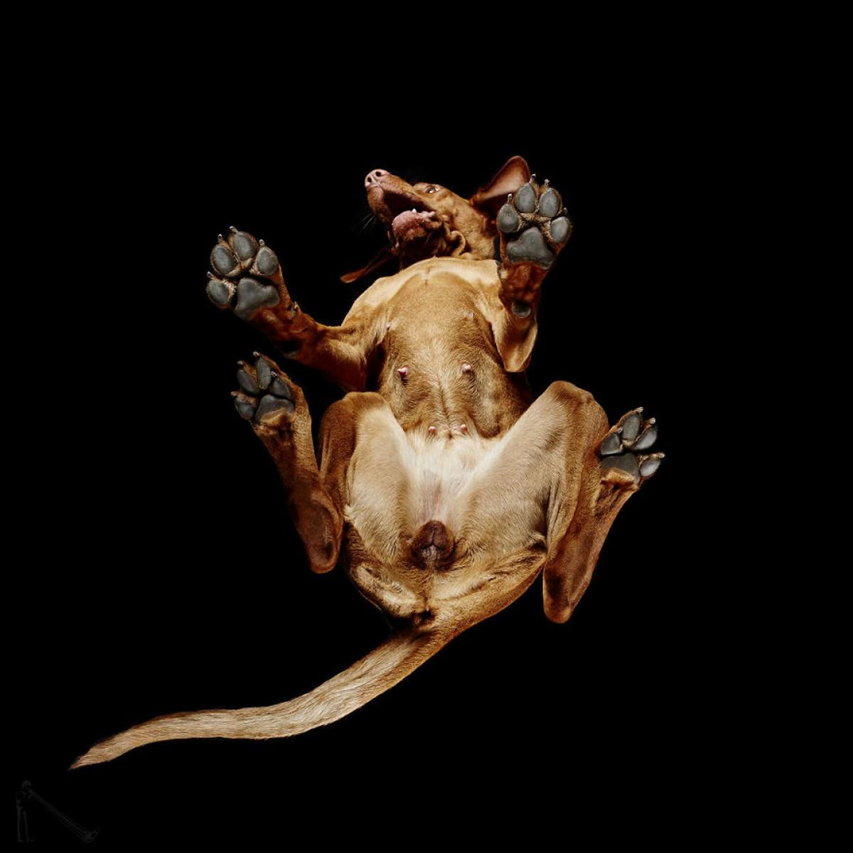 «Взгляд снизу»: чудные фотографии животных в проекте Андриуса Бурбы 11