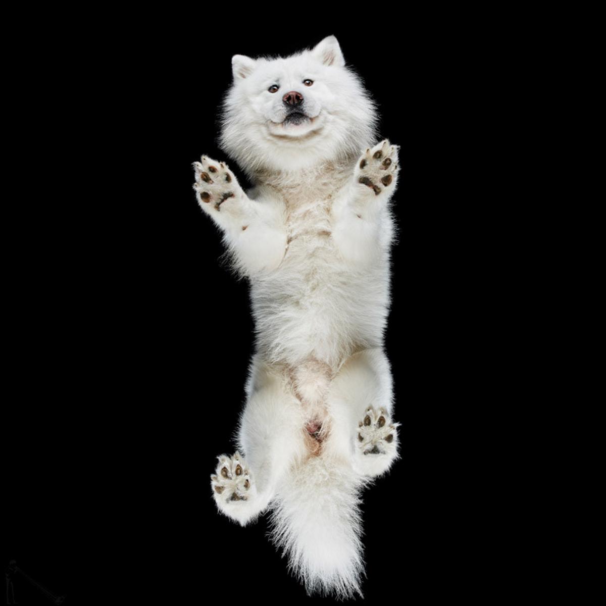 «Взгляд снизу»: чудные фотографии животных в проекте Андриуса Бурбы 14