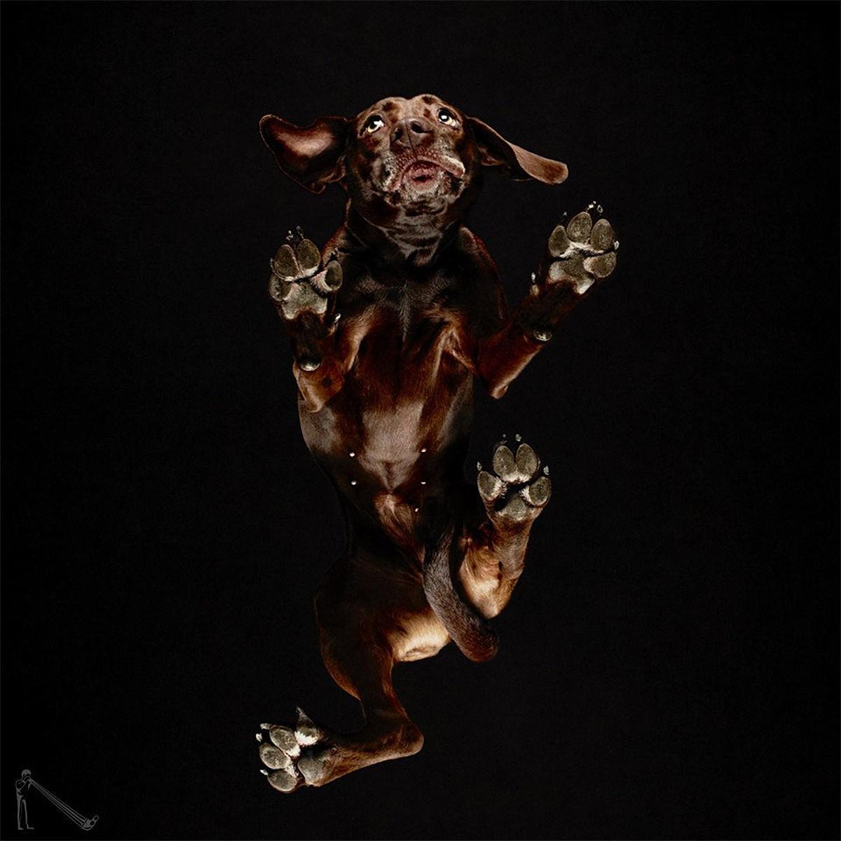 «Взгляд снизу»: чудные фотографии животных в проекте Андриуса Бурбы 15