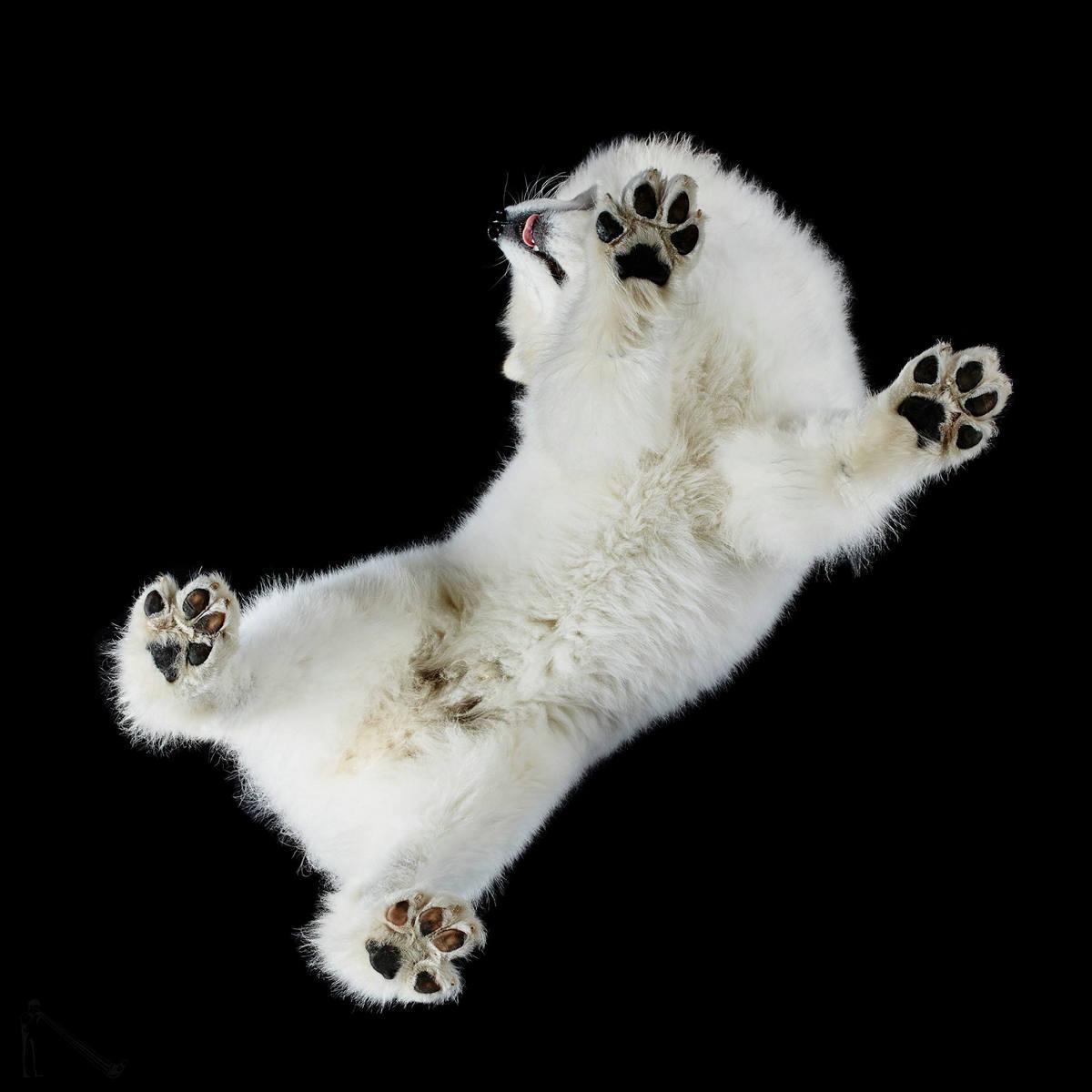 «Взгляд снизу»: чудные фотографии животных в проекте Андриуса Бурбы 17
