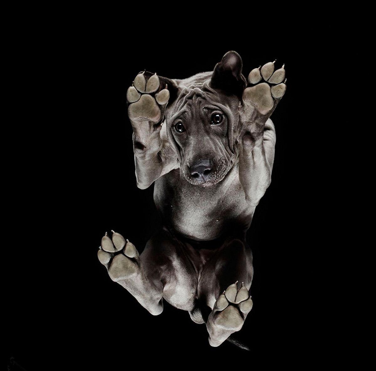 «Взгляд снизу»: чудные фотографии животных в проекте Андриуса Бурбы 2