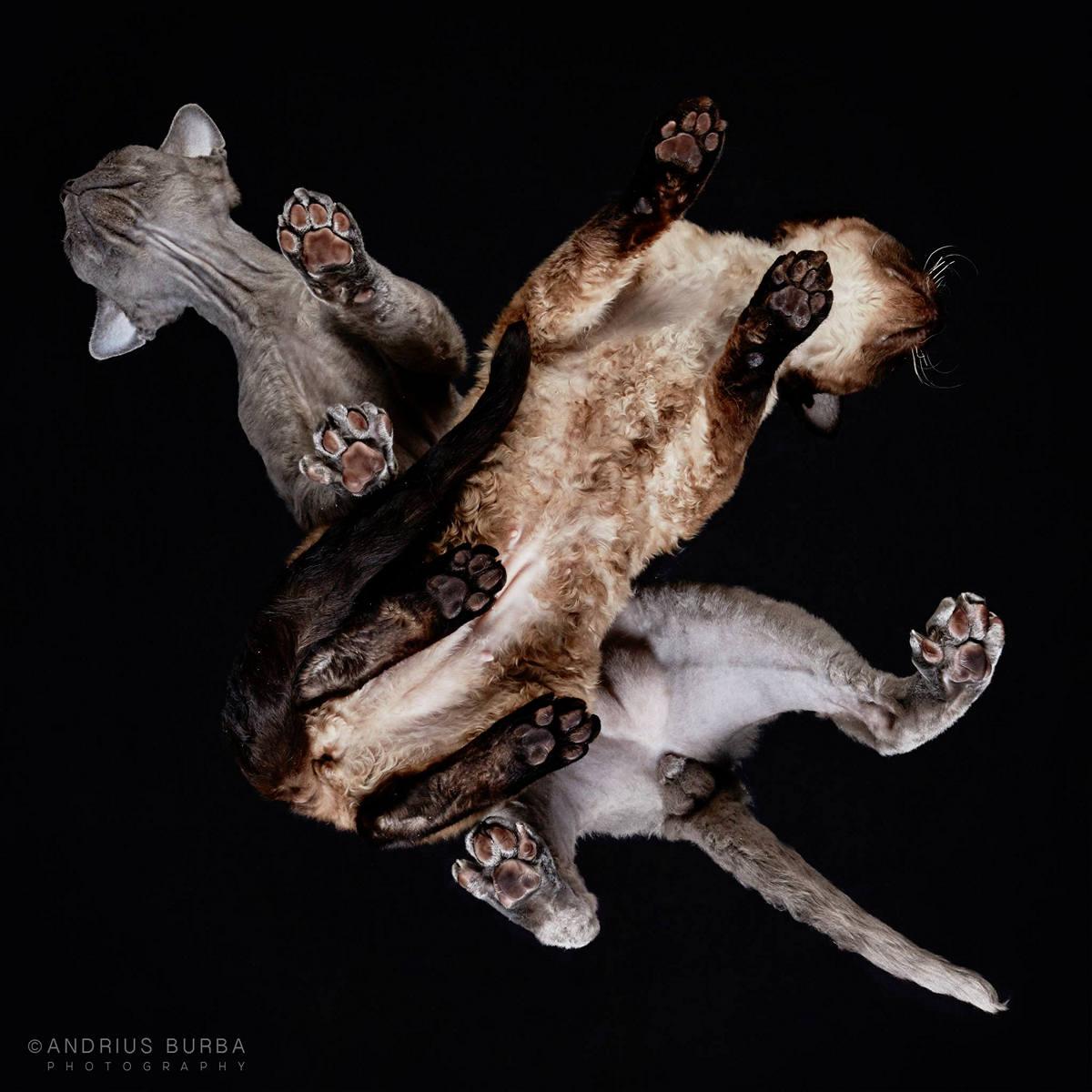 «Взгляд снизу»: чудные фотографии животных в проекте Андриуса Бурбы 21