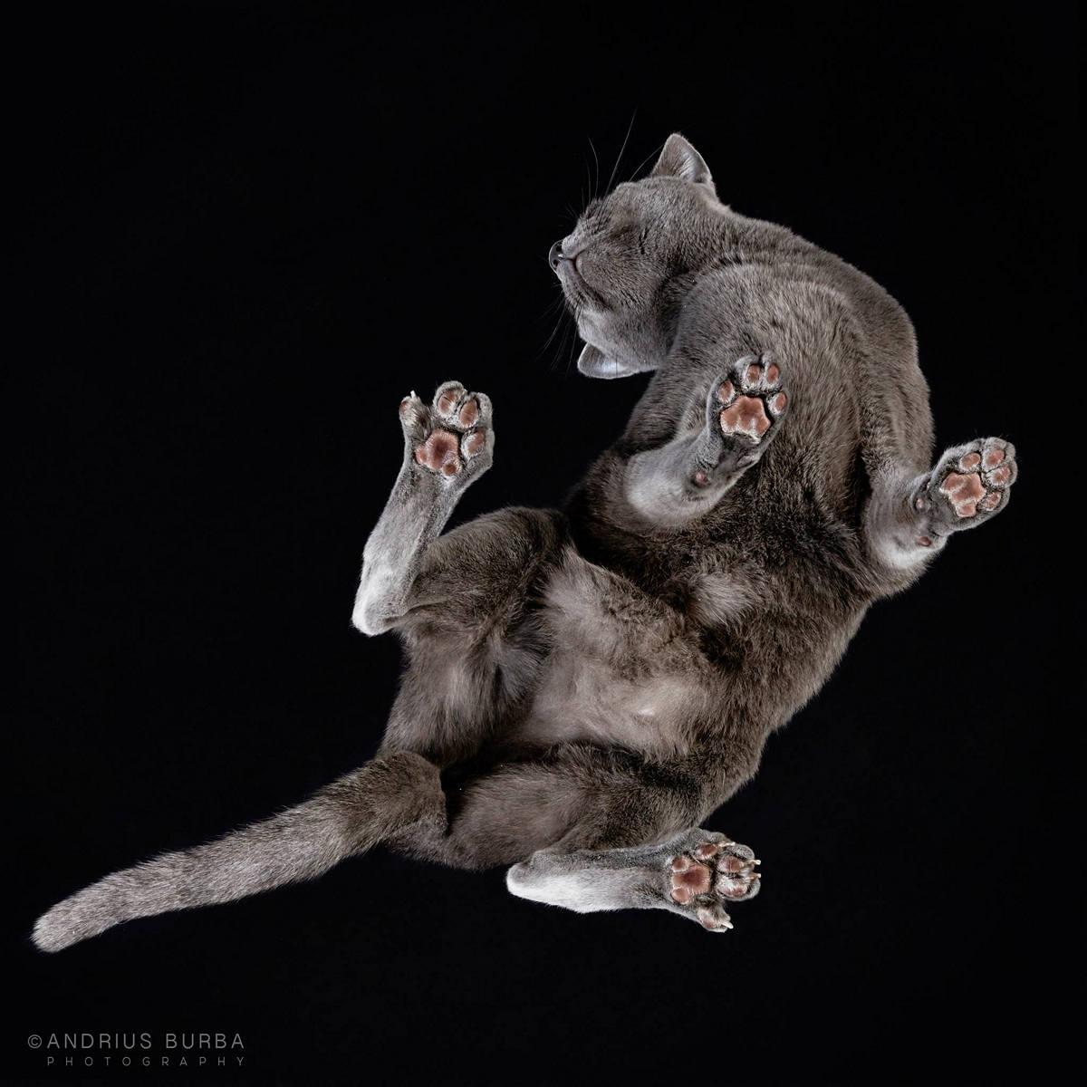 «Взгляд снизу»: чудные фотографии животных в проекте Андриуса Бурбы 27