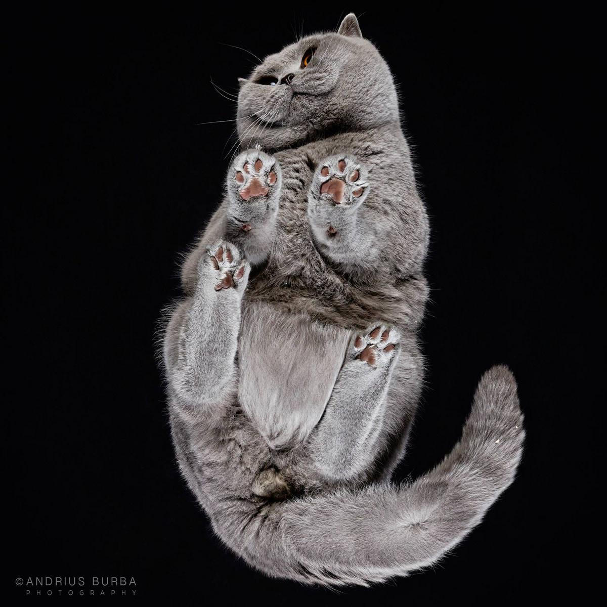 «Взгляд снизу»: чудные фотографии животных в проекте Андриуса Бурбы 28