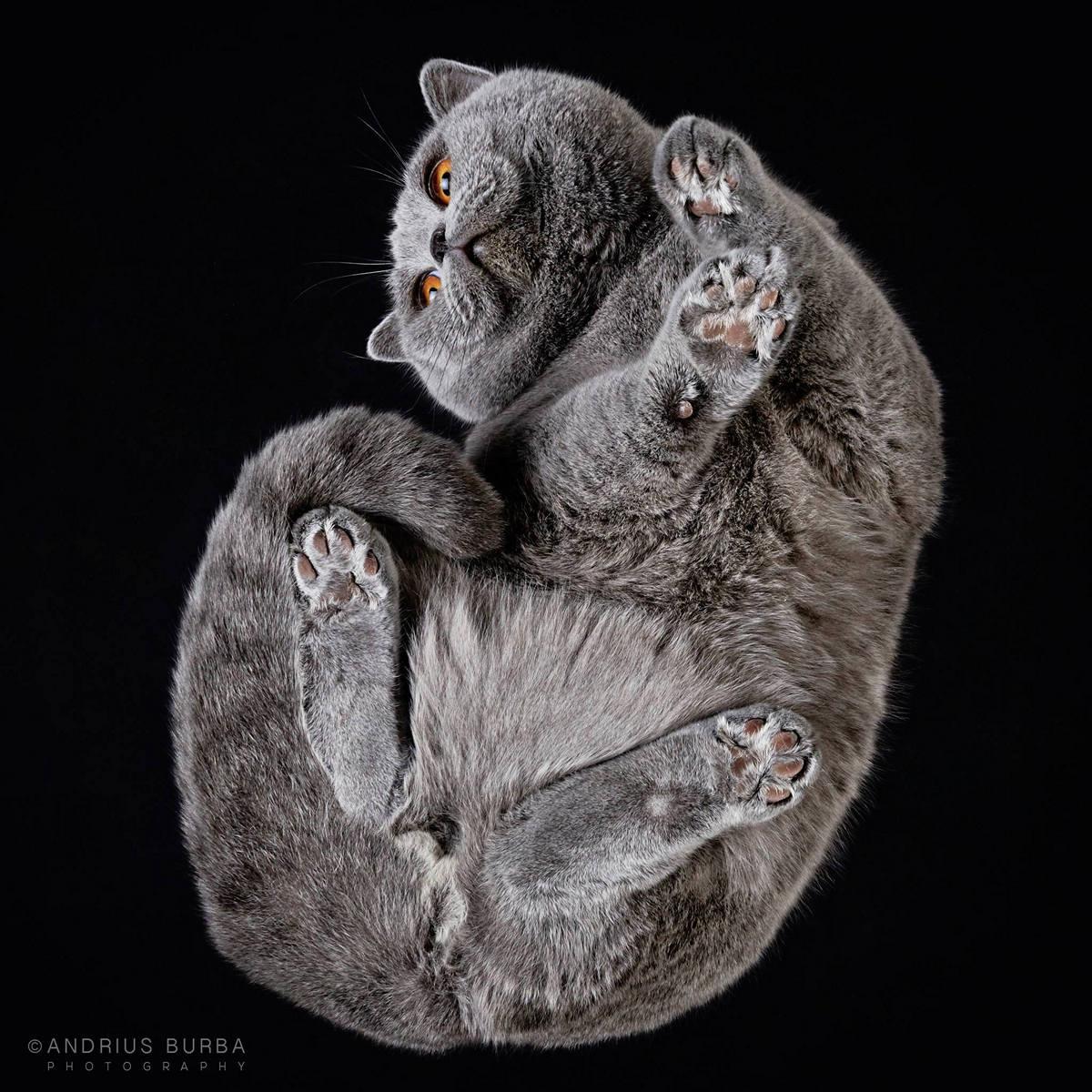 «Взгляд снизу»: чудные фотографии животных в проекте Андриуса Бурбы 29