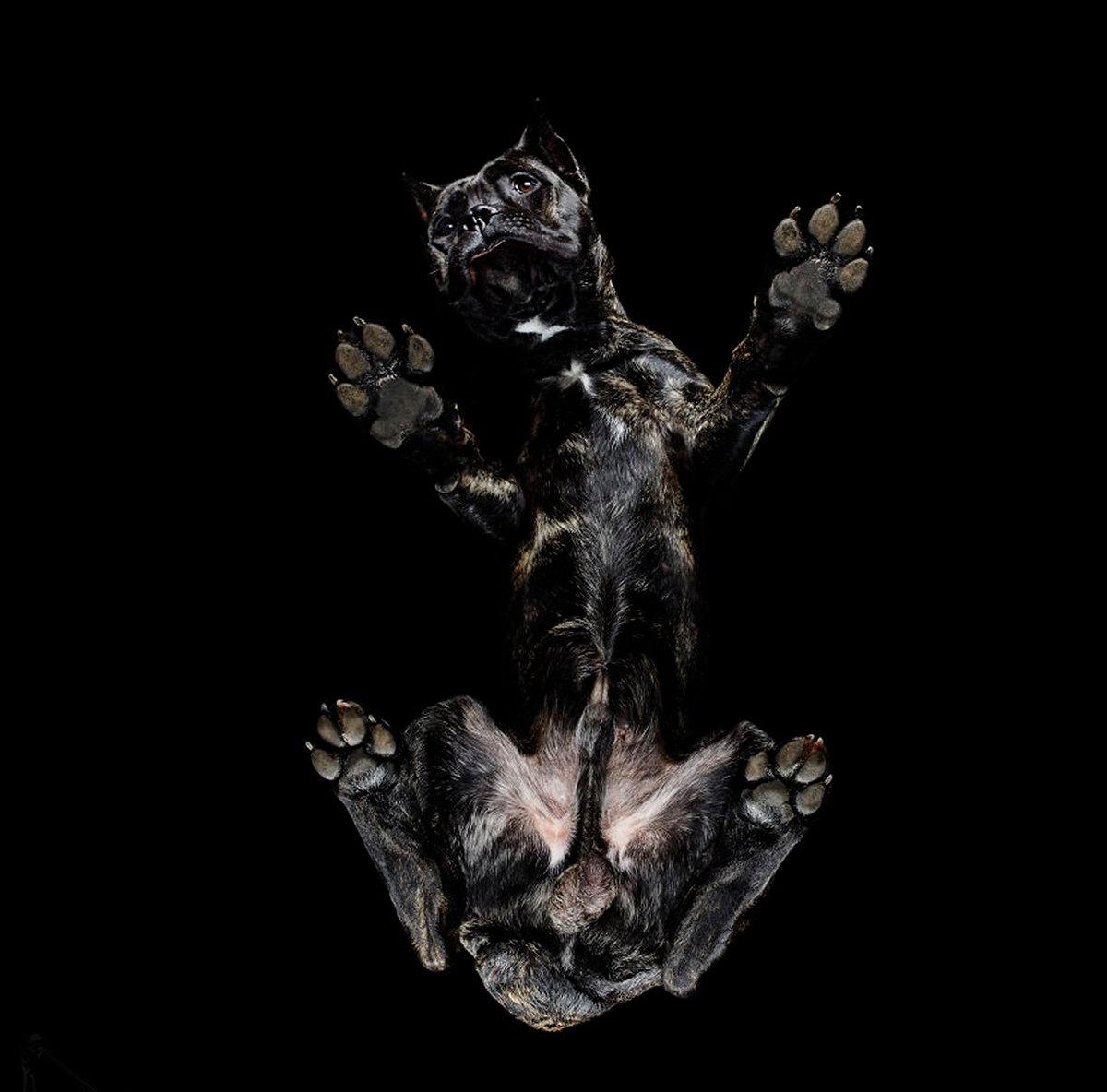«Взгляд снизу»: чудные фотографии животных в проекте Андриуса Бурбы 5