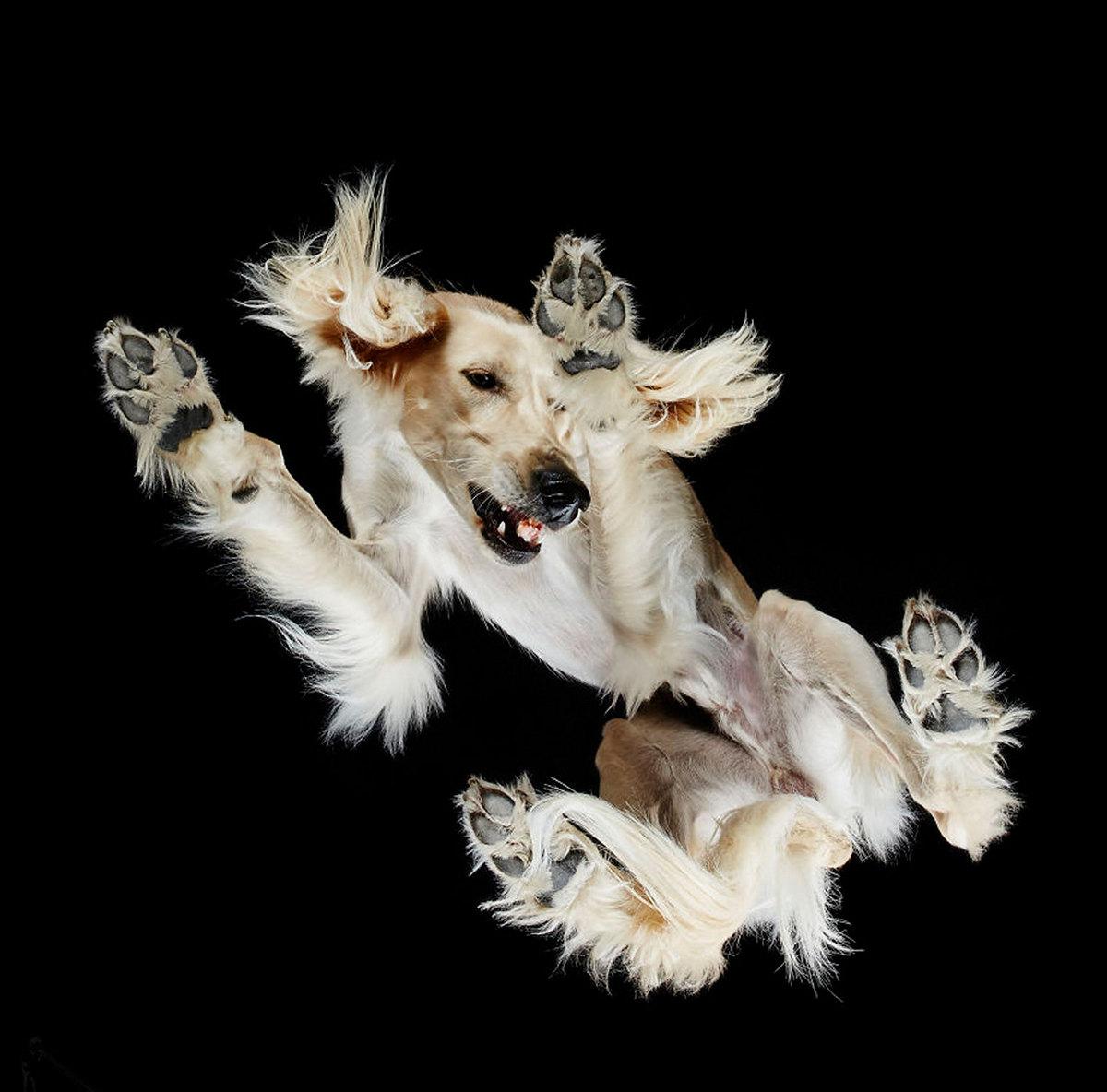 «Взгляд снизу»: чудные фотографии животных в проекте Андриуса Бурбы 7