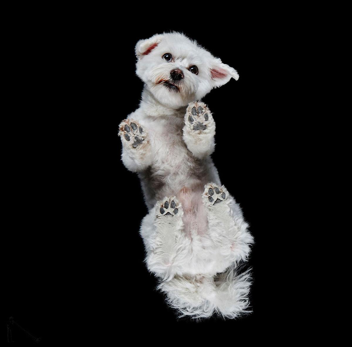 «Взгляд снизу»: чудные фотографии животных в проекте Андриуса Бурбы 8