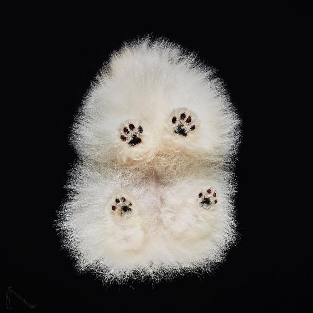 «Взгляд снизу»: чудные фотографии животных в проекте Андриуса Бурбы 02