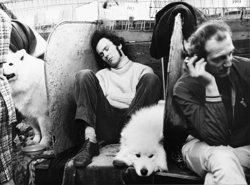 «Дай, Джим, на счастье лапу мне»: фотографии Ширли Бейкер с выставок собак 1960-70-х 10