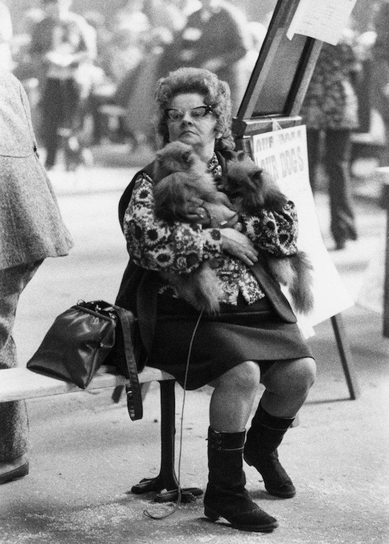 «Дай, Джим, на счастье лапу мне»: фотографии Ширли Бейкер с выставок собак 1960-70-х 13