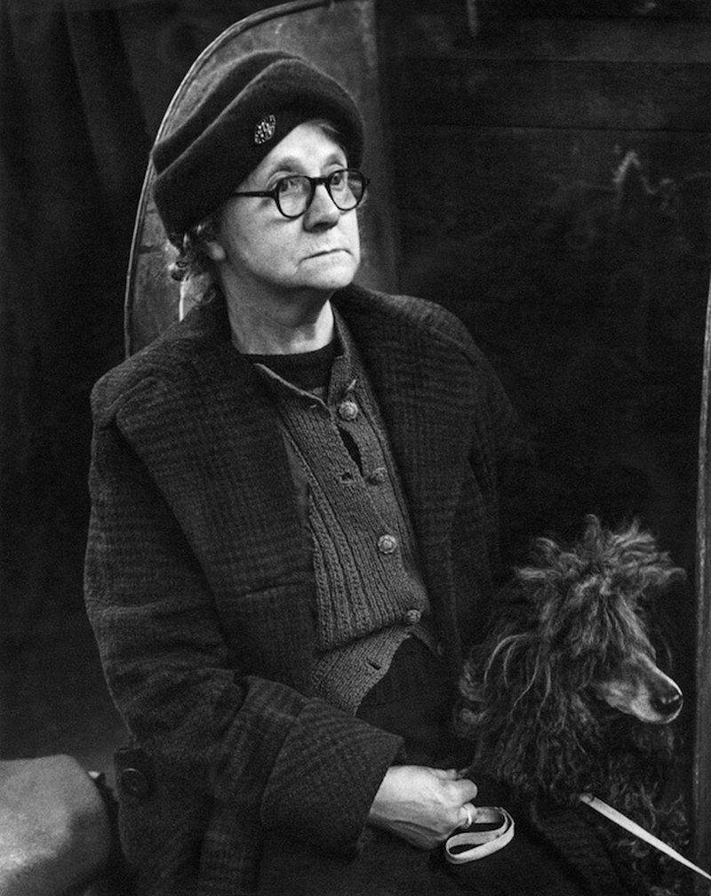 «Дай, Джим, на счастье лапу мне»: фотографии Ширли Бейкер с выставок собак 1960-70-х 14