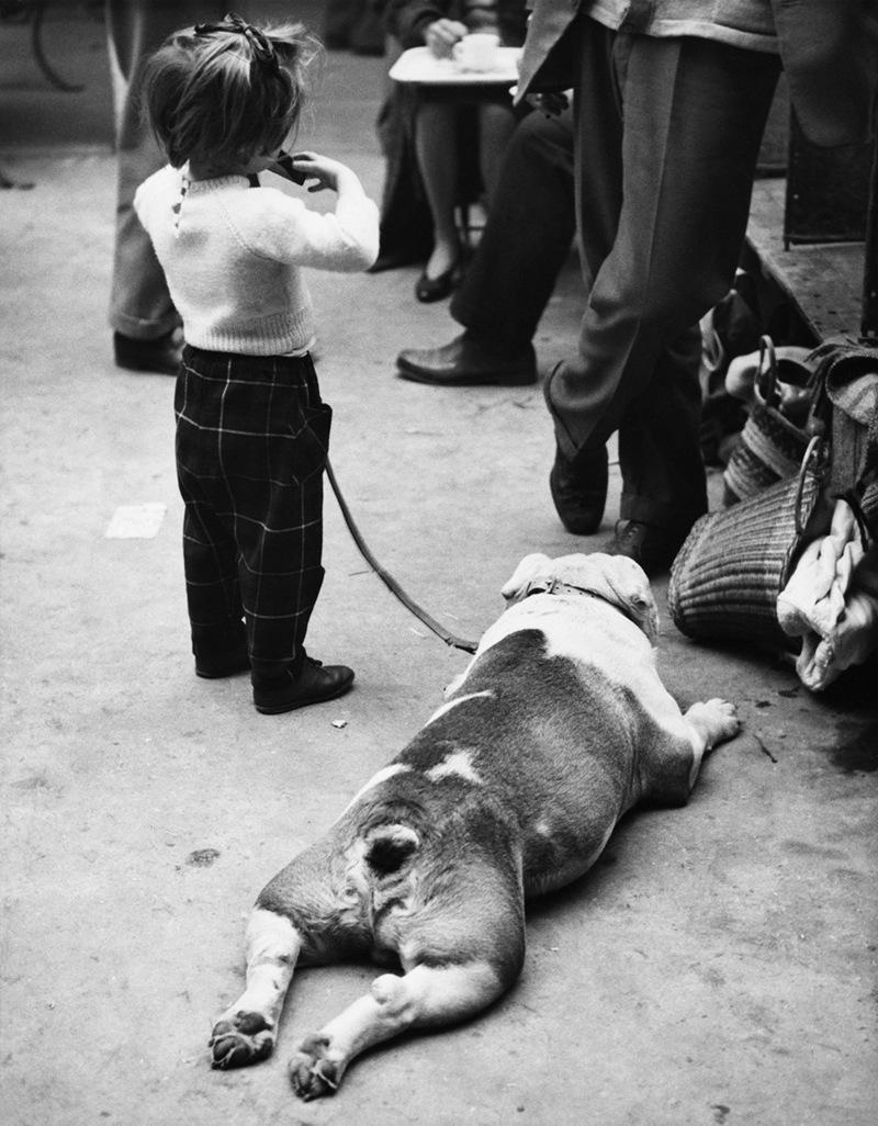 «Дай, Джим, на счастье лапу мне»: фотографии Ширли Бейкер с выставок собак 1960-70-х 15
