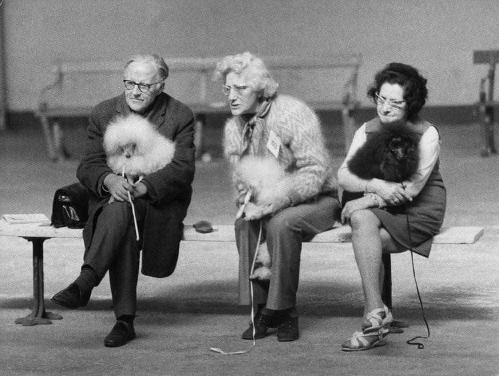 «Дай, Джим, на счастье лапу мне»: фотографии Ширли Бейкер с выставок собак 1960-70-х 2