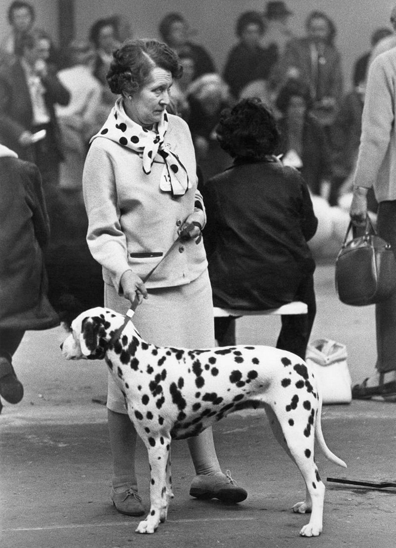«Дай, Джим, на счастье лапу мне»: фотографии Ширли Бейкер с выставок собак 1960-70-х 3