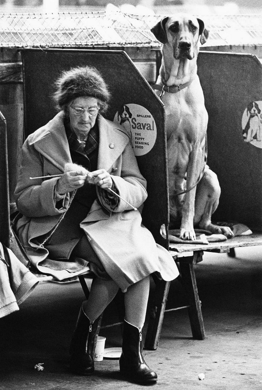 «Дай, Джим, на счастье лапу мне»: фотографии Ширли Бейкер с выставок собак 1960-70-х 4