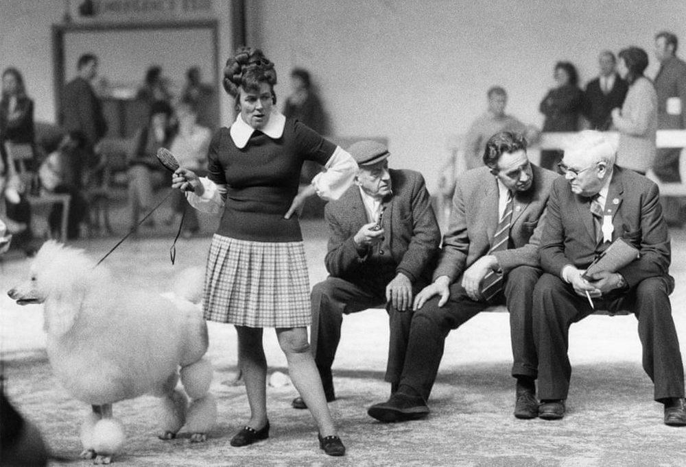 «Дай, Джим, на счастье лапу мне»: фотографии Ширли Бейкер с выставок собак 1960-70-х 5