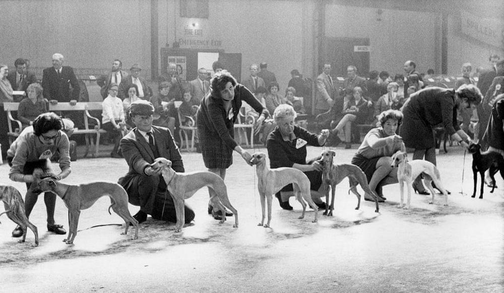 «Дай, Джим, на счастье лапу мне»: фотографии Ширли Бейкер с выставок собак 1960-70-х 6