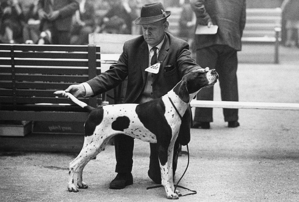 «Дай, Джим, на счастье лапу мне»: фотографии Ширли Бейкер с выставок собак 1960-70-х 7