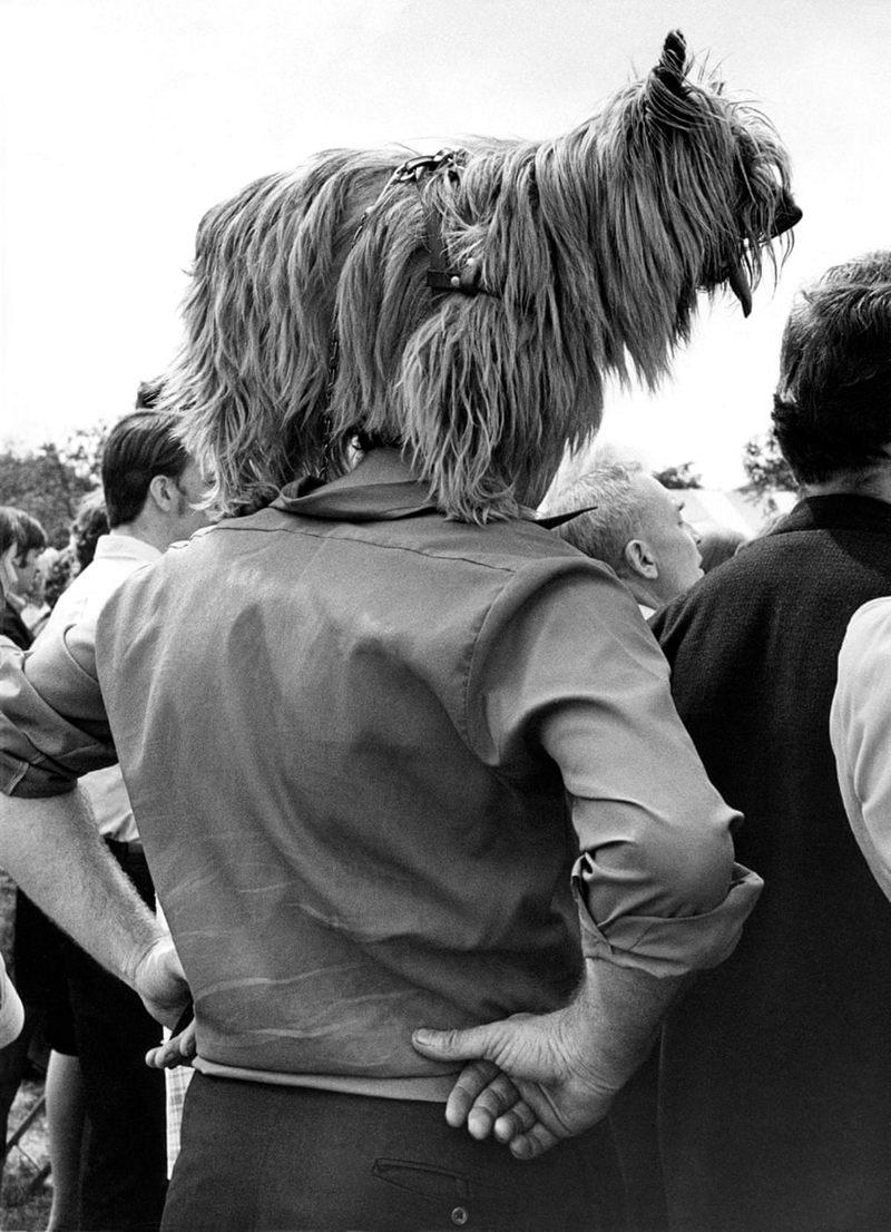 «Дай, Джим, на счастье лапу мне»: фотографии Ширли Бейкер с выставок собак 1960-70-х 9