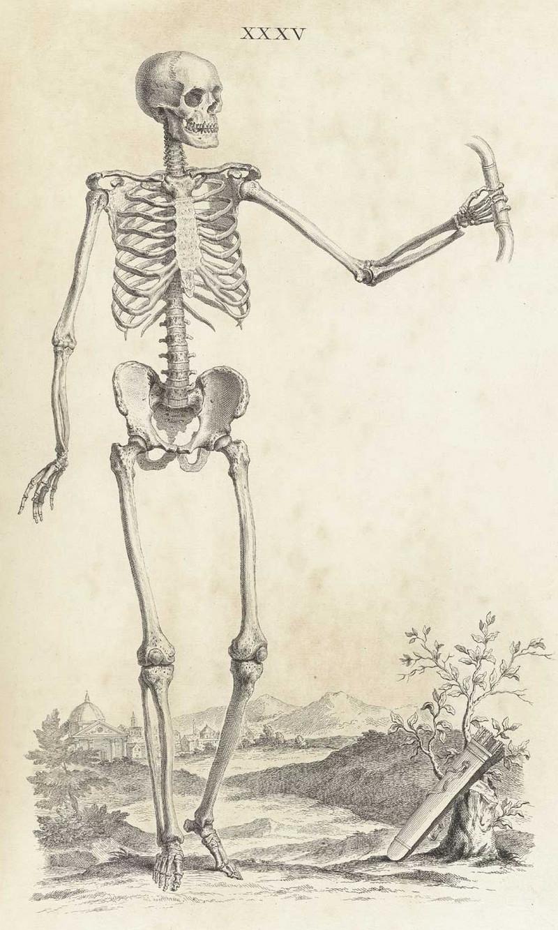 Достоверность и изящество в костях. «Остеография» Уильяма Чеселдена (1733)  18
