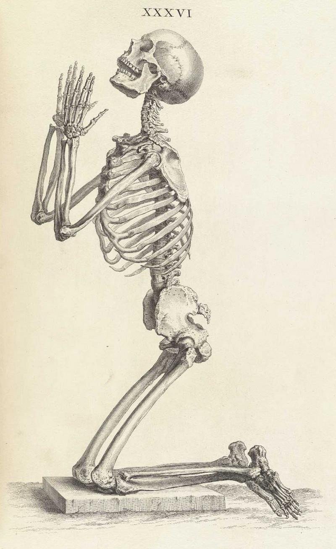 Достоверность и изящество в костях. «Остеография» Уильяма Чеселдена (1733)  19