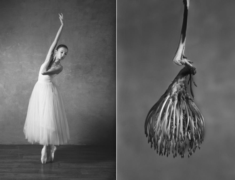 «Балерина и цветы» – серия о сходстве двух изяществ  12