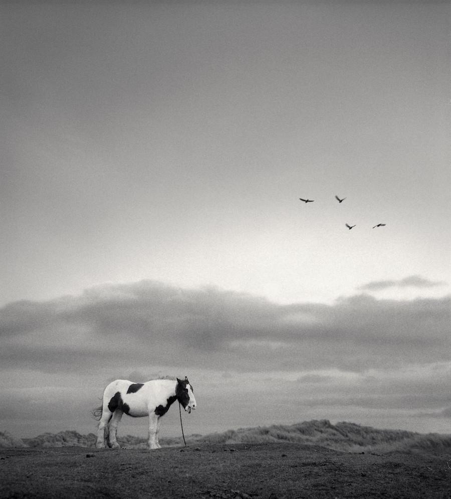 Мир, пребывающий в гармонии, на фотографиях Пентти Саммаллахти 3 2 2