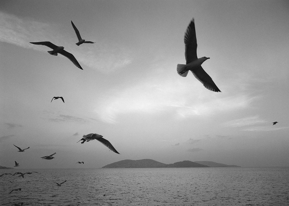 Мир, пребывающий в гармонии, на фотографиях Пентти Саммаллахти 4 1 6