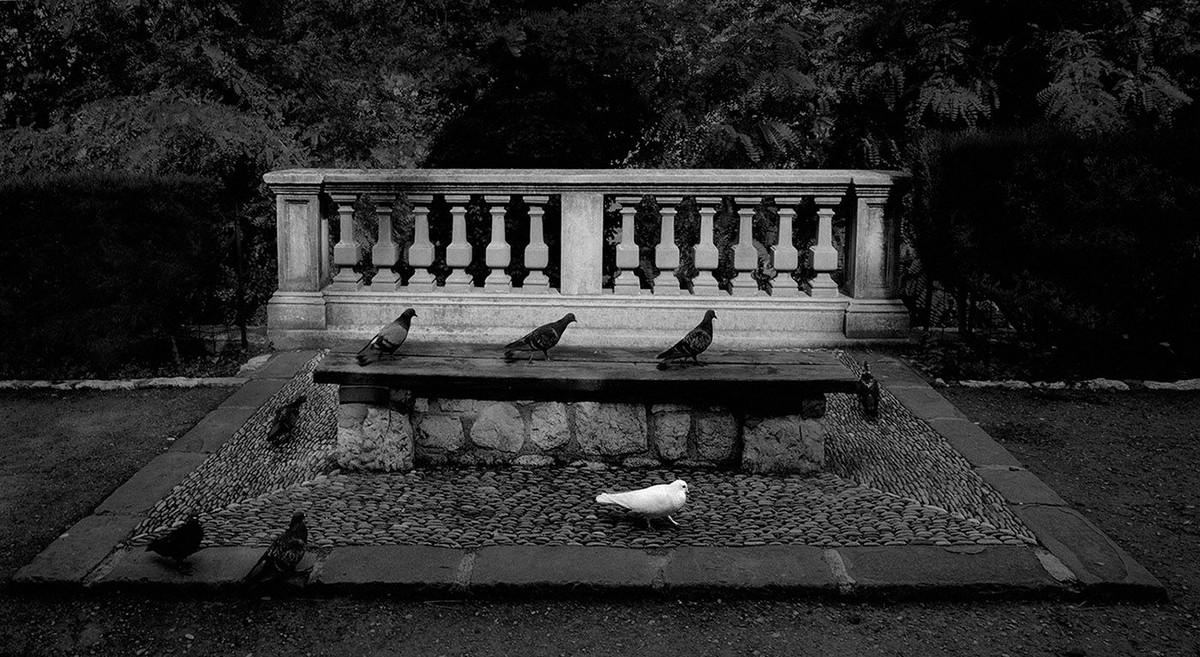Мир, пребывающий в гармонии, на фотографиях Пентти Саммаллахти 5 1