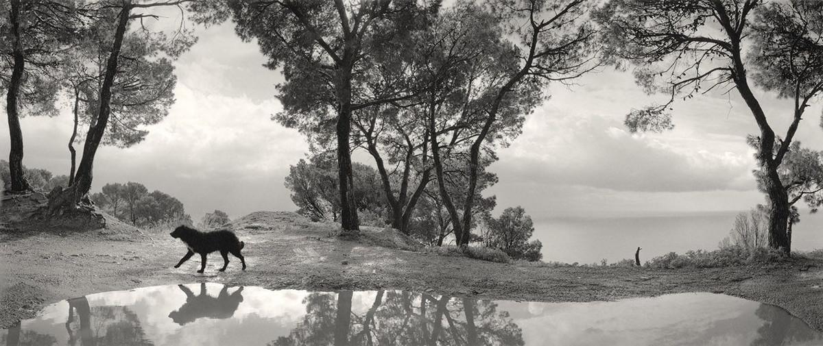 Мир, пребывающий в гармонии, на фотографиях Пентти Саммаллахти 5 1 2