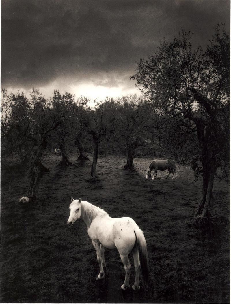 Мир, пребывающий в гармонии, на фотографиях Пентти Саммаллахти 5 2