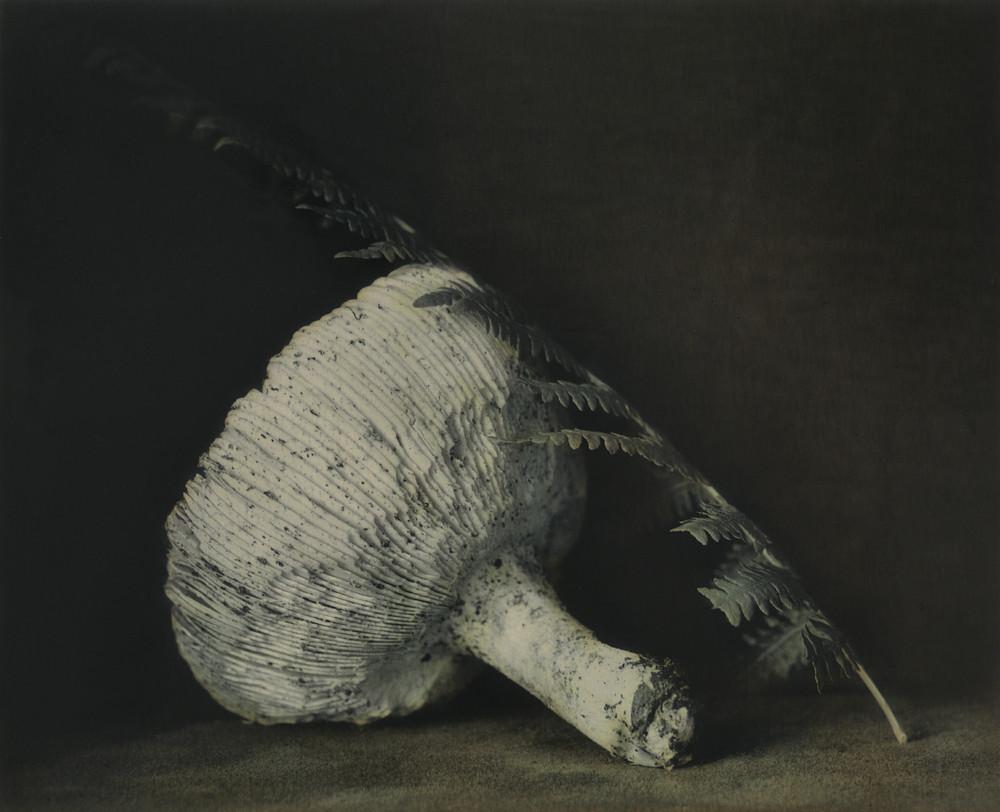 Удивительные натюрморты Ингара Краусса 1