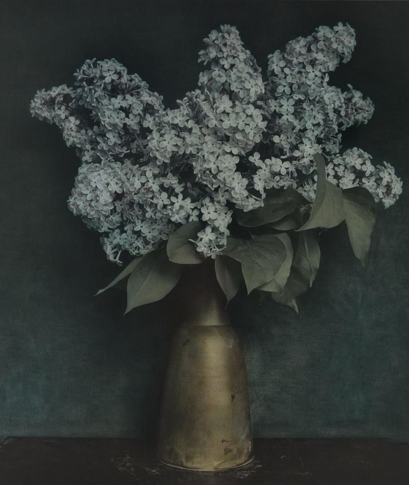 Удивительные натюрморты Ингара Краусса 16
