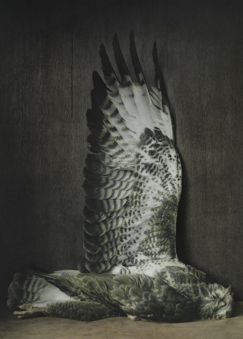 Удивительные натюрморты Ингара Краусса 21
