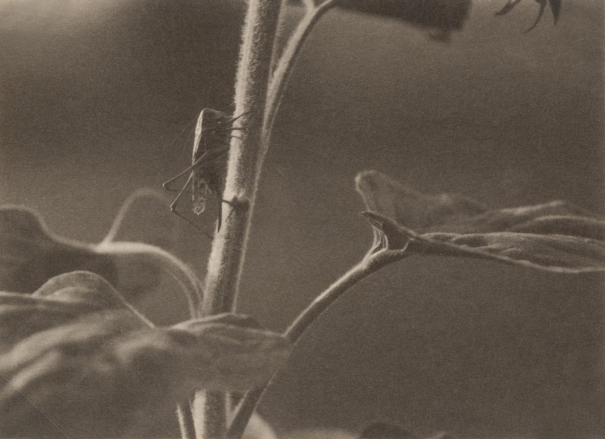 Классика советской довоенной фотографии 1900 1940 ulitin 1200 2