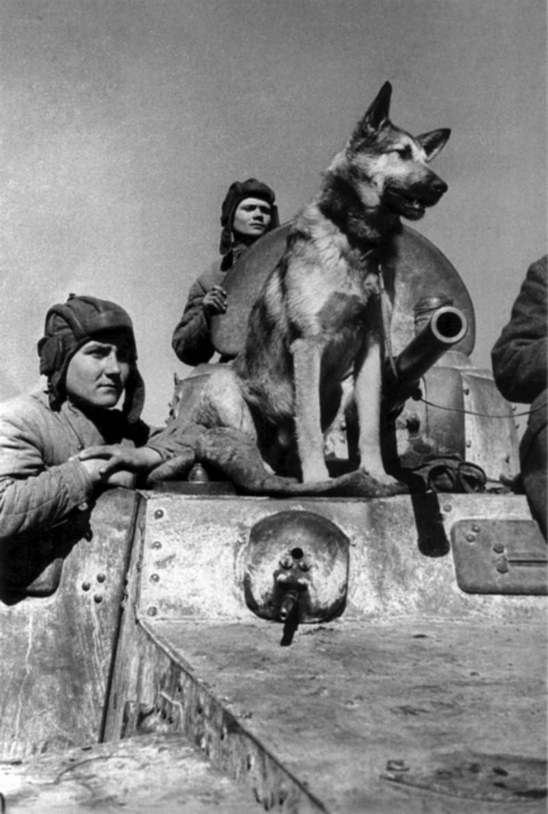 фронт и тыл Великой Отечественной на снимках советских военных фотографов evzerihin 800 4