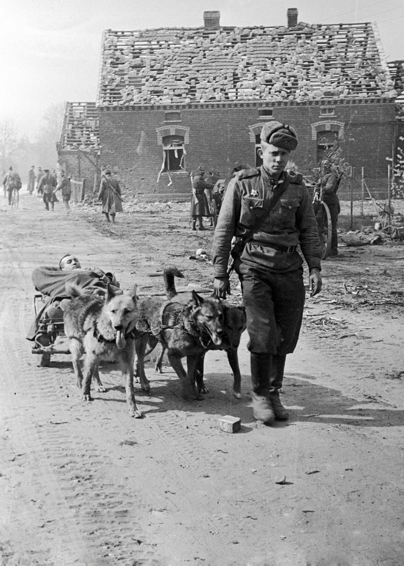 фронт и тыл Великой Отечественной на снимках советских военных фотографов ignatovich 800 2
