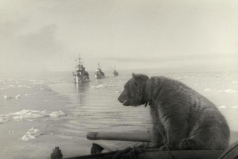 фронт и тыл Великой Отечественной на снимках советских военных фотографов shimanskiy 800