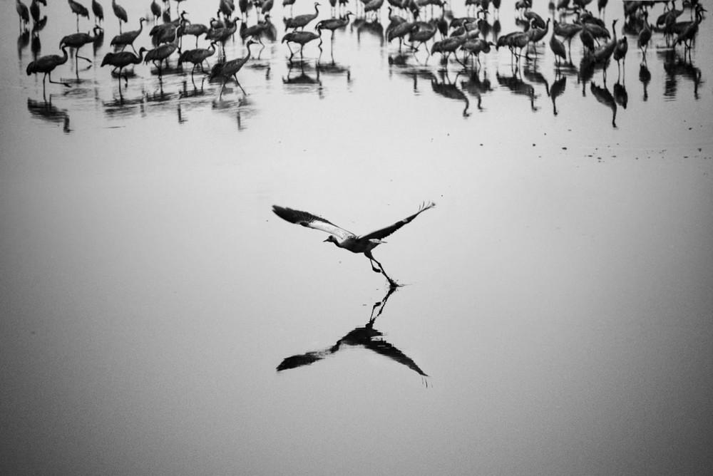 Свет, тени и силуэты: магия чёрно-белой уличной фотографии Гая Коэна 50