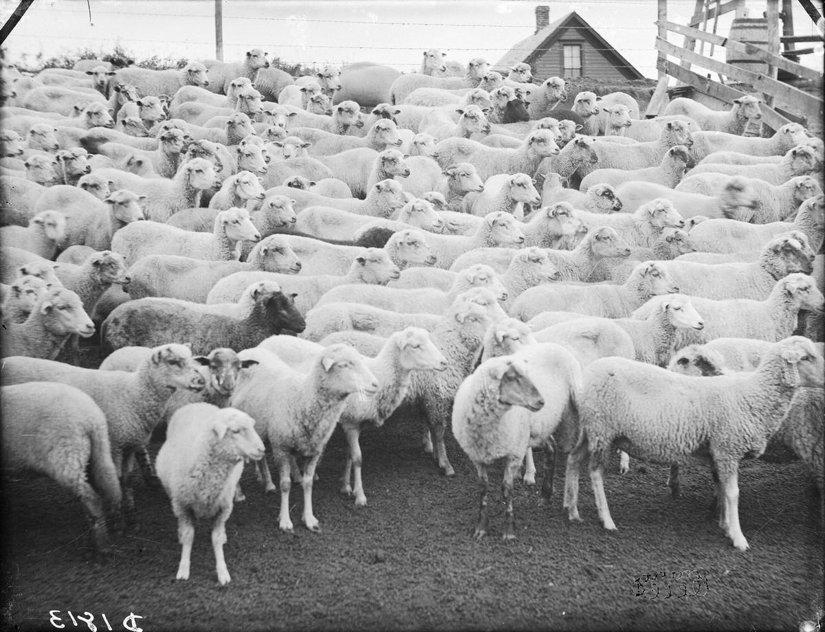 Как поднималась американская целина. Архивные фотографии пионеров Великих равнин конца 19-го века 11