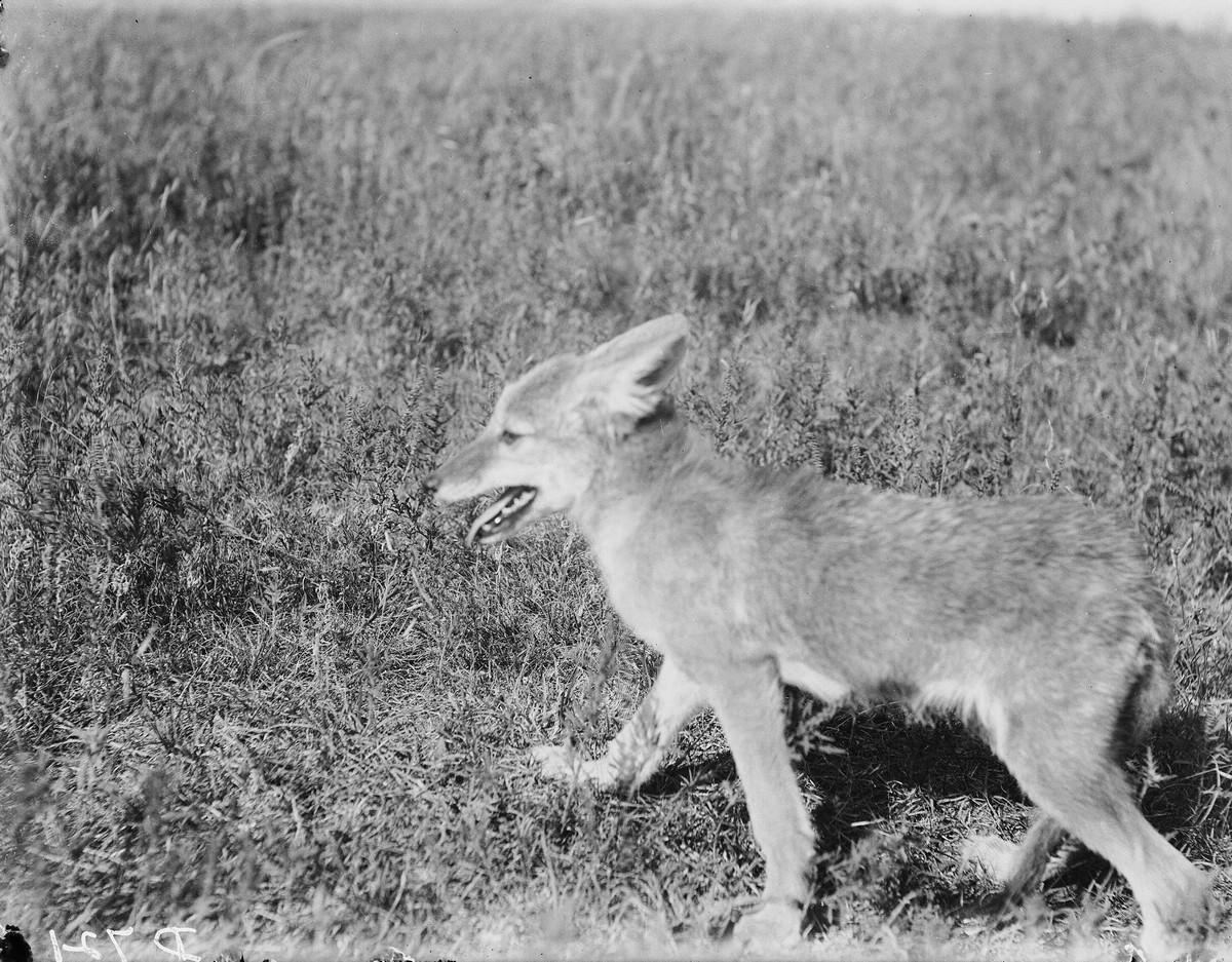Как поднималась американская целина. Архивные фотографии пионеров Великих равнин конца 19-го века 8