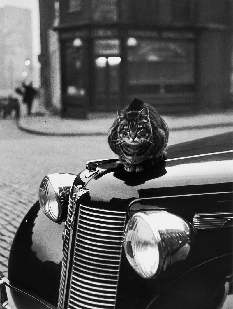 Британский фотожурналист Терстон Хопкинс 37