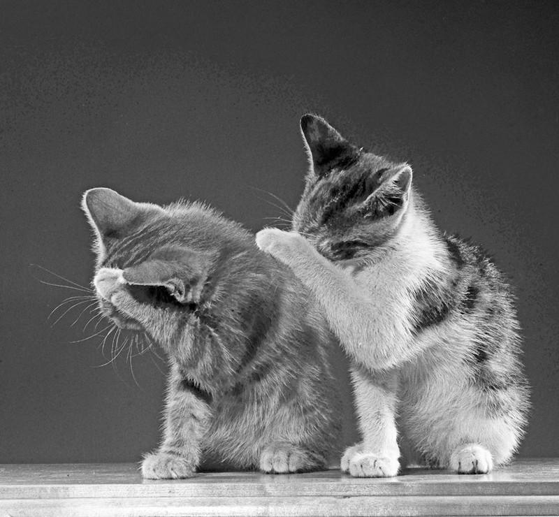 Уолтер Чандоха – человек, который 70 лет фотографировал кошек   14