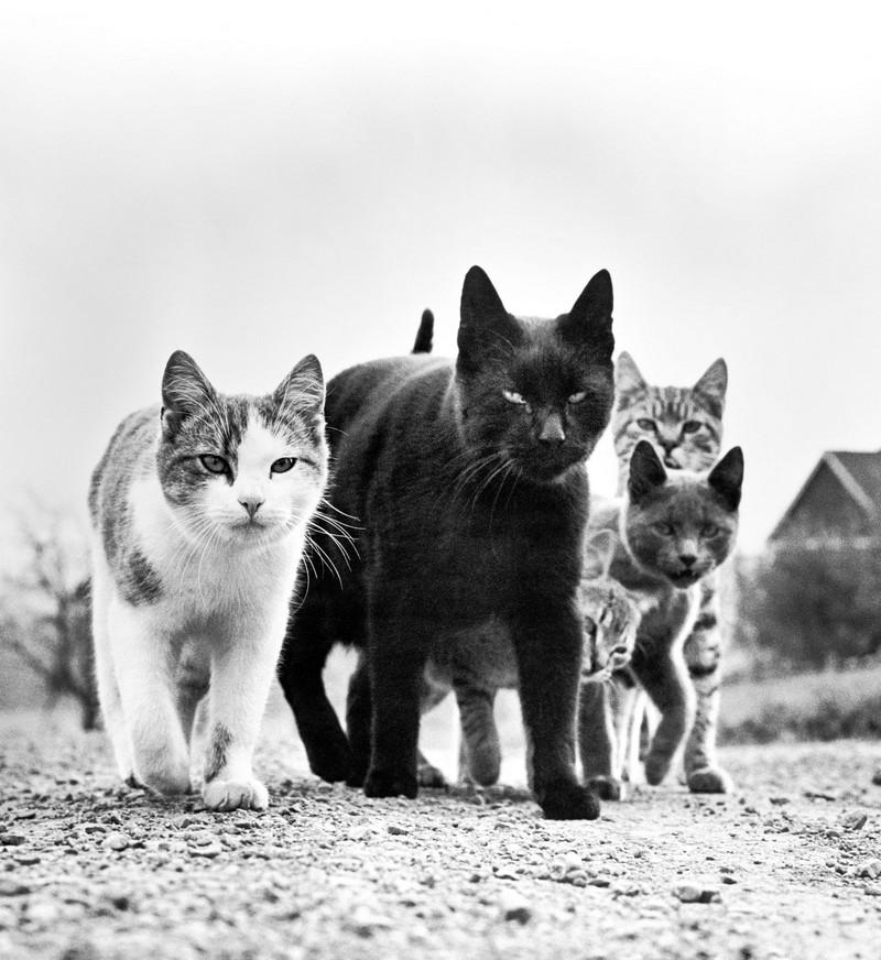 Уолтер Чандоха – человек, который 70 лет фотографировал кошек   2