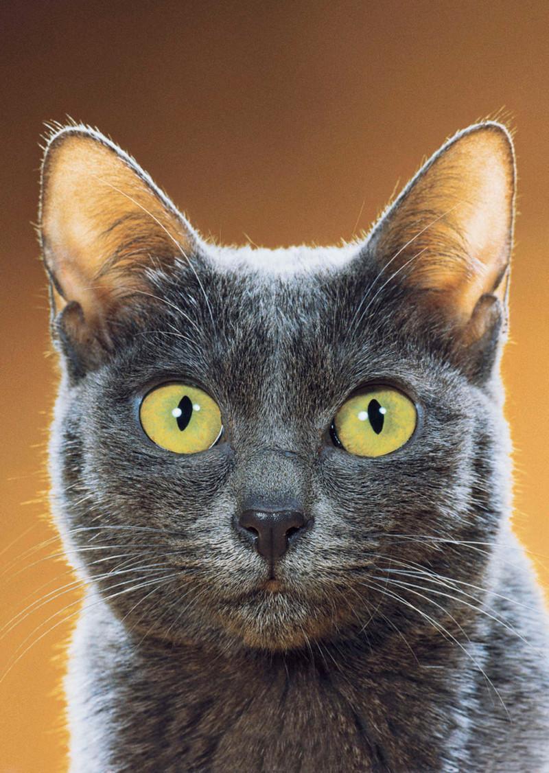 Уолтер Чандоха – человек, который 70 лет фотографировал кошек   20