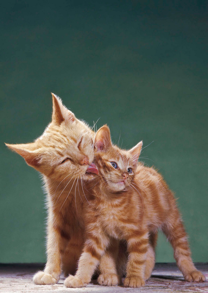 Уолтер Чандоха – человек, который 70 лет фотографировал кошек 22